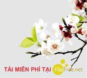 Ảnh hoa đào hoa mai png // ảnh 4