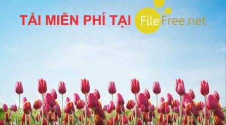 Background hoa tulip nền trời file corel free
